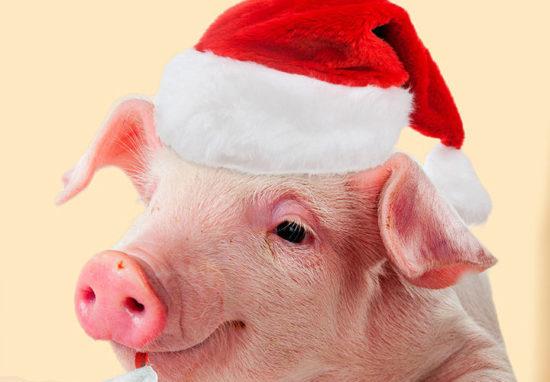 С годом свиньи
