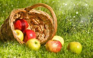 Почему нельзя есть яблоки до Яблочного Спаса матери потерявшей ребенка